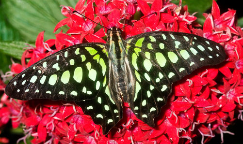 Butterfly---Red-Flowers.jpg