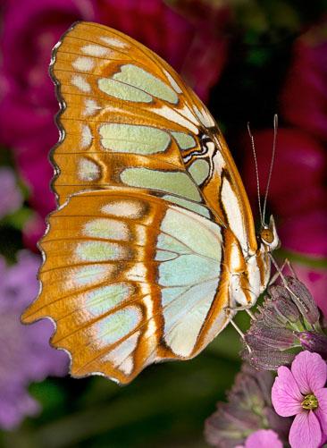 Colorfulbutterflyl.jpg