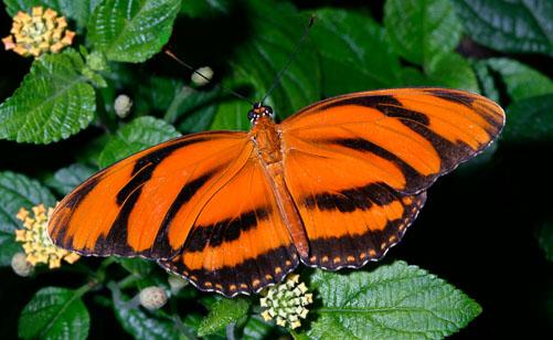Orange-Fritillary.jpg