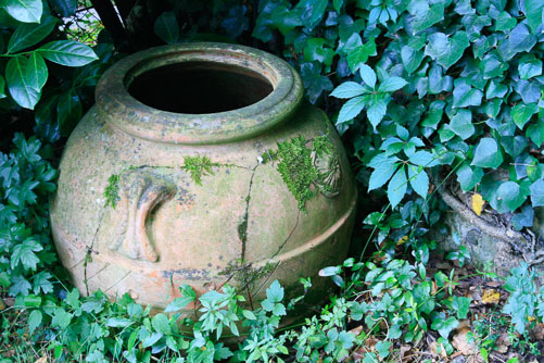 In-Federica's-Garden.jpg
